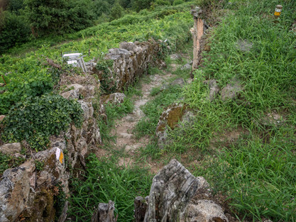 Viticultura heroica en Rabacallos...
