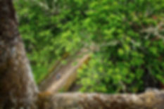 Rodeado de centenarios castaños se encuentra el Monasterio de Santa Cristina de Ribas de Sil en plena Ribeira Sacra orensana. Desde Parada de Sil (Orense, Galicia, España) sale una carretera que nos traera por impresionantes paisajes verticales hasta esta joya del románico gallego. Photoperiplo anduvo por allí con sus fotografías.