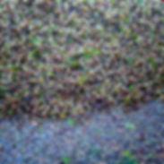 TINTO o BLANCO 11.jpg