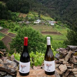 Mimadas cepas dan vinos generosos como estos DPieiga...en Negueira de Muñiz (Lugo)