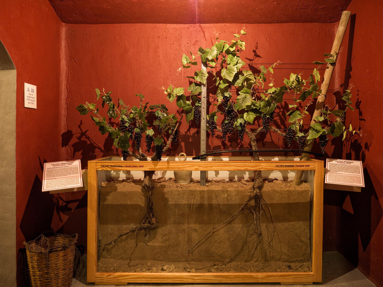 Laberinto del vino