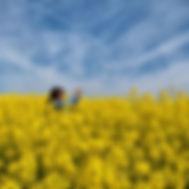 De camino hacia Muros, impresionantes los campos de Castilla...