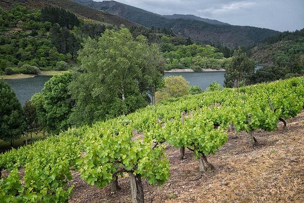 Buenas sensaciones con esto del vino se han generado en Negueira de Muñiz en Lugo, Photoperiplo viajó para fotografiar aquello...