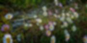 Preciosas flores en los alrededores de la iglesia de Santiago en Mondoñedo (Lugo) Galicia Spain
