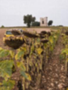 Una de las torres del telégrafo óptico, la de Horcajada de la Torre ya muy cerca de Naharros (Cuenca) Photoperiplo subió a fotografiarla