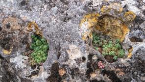 Flora de la Hoz del río Gritos