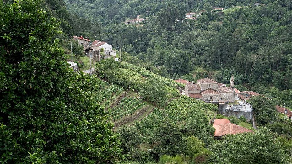 Parroquia de Viñoás de Nogueira de Ramuín (Ribeira Sacra, Ourense, Galicia) se mira en el Miño desde sus viñedos. Imagen de www.photoperiplo.com