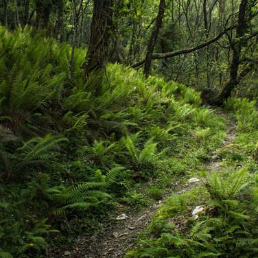 Desde aquí parte un ramal de la ruta, el Camino da Sete Voltas...