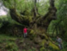 Milenario castaño en Entrambosríos, en el Concello de Parada de Sil (Orense, Galicia, España). Ana Mary y Paco de Photoperiplo estuvieron allí disfrutando de tanta belleza.