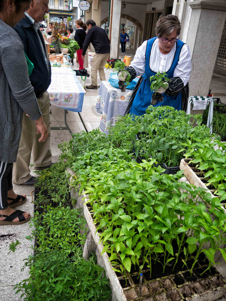Nuevas plantas traeran esos buenos productos gallegos de la tierra.