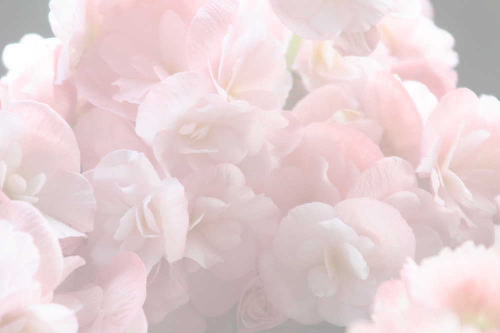 Pink%2520Petals%2520_edited_edited.jpg