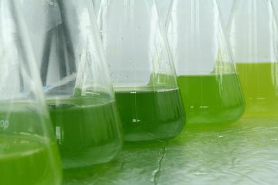 Algae-culture