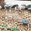 Thumbnail: Botol kaca bening 50ml injeksi second tutup karet