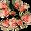 Thumbnail: Spray Roses Peach