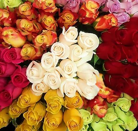 Custom Roses Special Pack