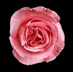 Pink Xpression-min.png
