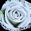 Thumbnail: Lavender Roses