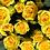Thumbnail: Spray Roses Yellow