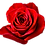 Thumbnail: Red Roses