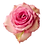 Thumbnail: Medium Pink Roses