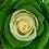 Thumbnail: Energy Roses