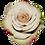 Thumbnail: Cream Roses