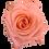 Thumbnail: Peach Roses