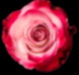 Pink Farfalla-min.png