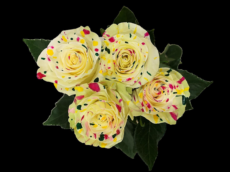 Polka Roses