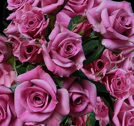Spray Roses Purple