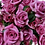 Thumbnail: Spray Roses Purple