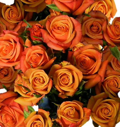 Spray Roses Orange