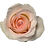 Thumbnail: Light Pink Roses