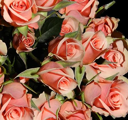 Spray Roses Peach