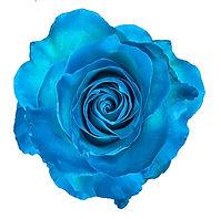 Blue Caribe.jpg