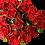 Thumbnail: Spray Roses Red