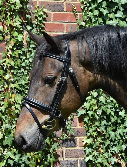 PeeWee Comfort Dressage Bridle - with flash noseband