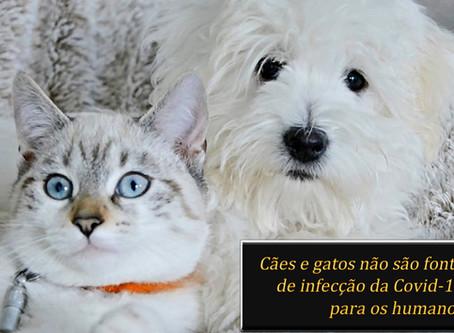 Especialista explica: cães e gatos não transmitem coronavírus para humanos