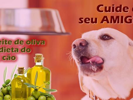 Azeite de oliva extra virgem na dieta do cachorro