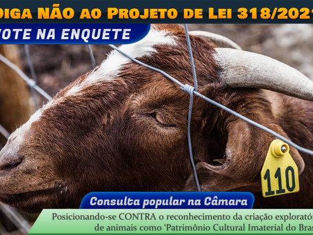 Diga NÃO ao PL 318/2021: proposta quer transformar exploração animal em 'patrimônio cultural'
