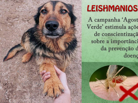 Leishmaniose: doença pode ser silenciosa no corpo do cão