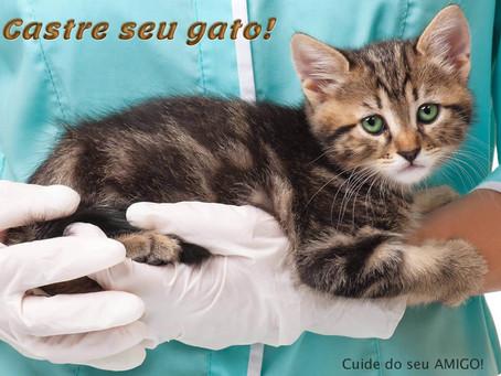 Castração de gatos: seis motivos para realizar a cirurgia