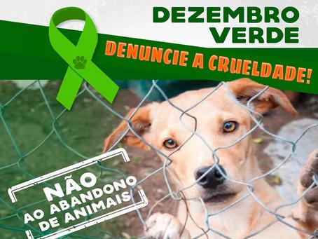 Dezembro Verde alerta sobre o abandono de animais