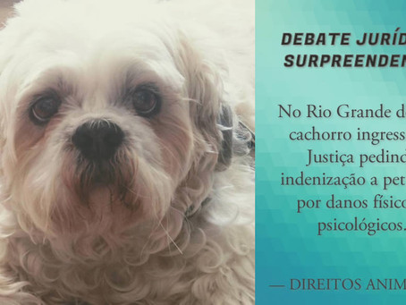 Cachorro pede indenização por danos sofridos em pet shop no RS