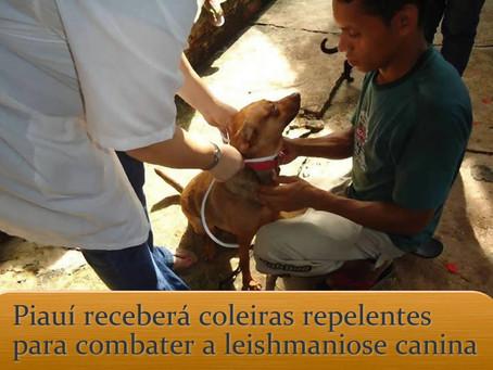 Calazar: Piauí vai receber coleiras repelentes para proteger cães da doença