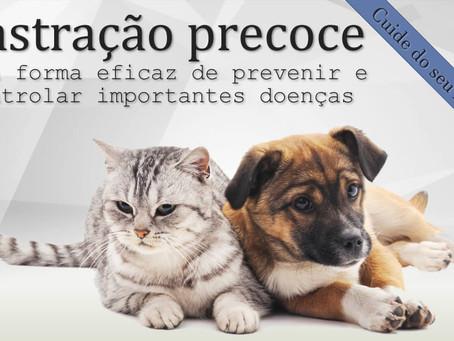 Importância da castração precoce em cães e gatos