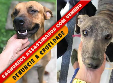 Cães assassinados: OAB-PI pede reforço na fiscalização da venda de veneno