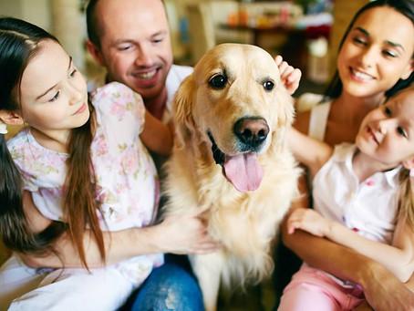 Animais de estimação: coisas ou integrantes da família?