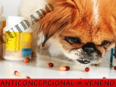 Perigos do uso de anticoncepcionais em cães e gatos