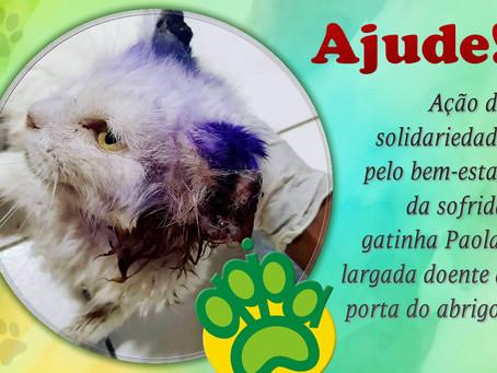Urgente: ajude gatinha doente largada à porta da APIPA